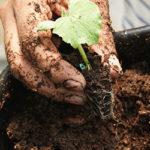 ¿Qué es el Peat Moss y para qué sirve?
