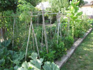 Huerto en Jardin