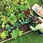La huerta en casa, solución para una alimentación saludable