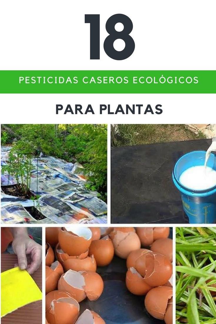 18 Repelentes Caseros Ecológicos Para Plantas