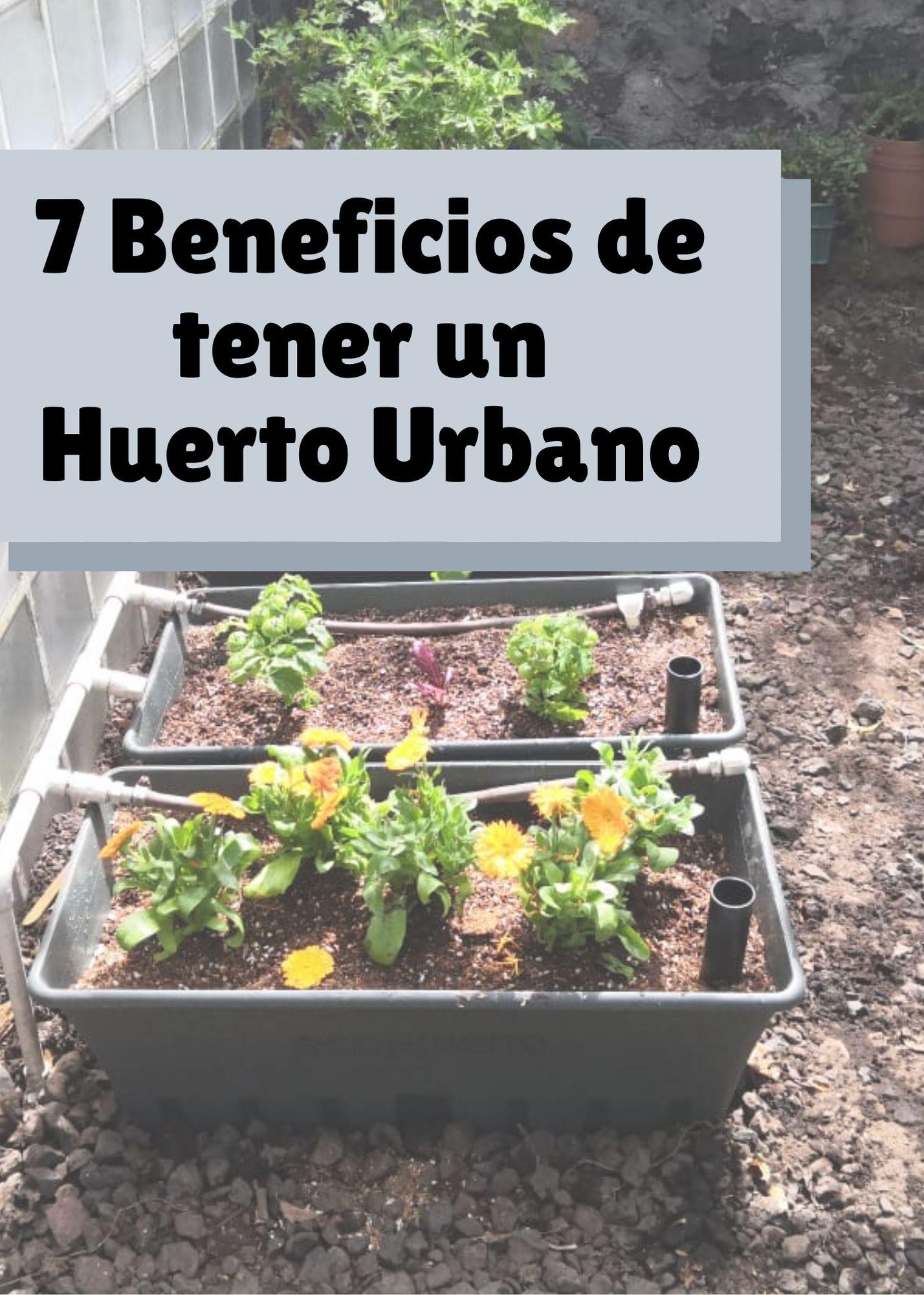 7 Beneficios de tener un Huerto Urbano