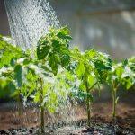 Captación de Agua de Lluvia en el Huerto