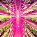 Futuro de la Agricultura; Granjas Verticales