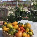La Agricultura Urbana en la Pandemia