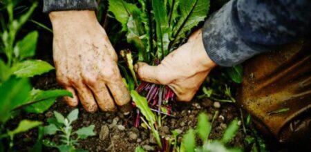 ¿Sabías que existen cultivos que pueden aportar nutrientes al suelo?