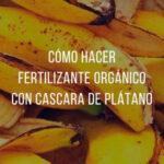 Té de Plátano como Fertilizante Ecológico