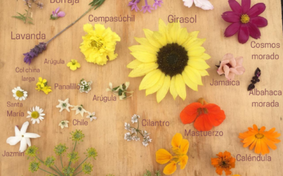 ¿Sabías que puedes comer flores?