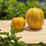¿Ya conoces el Pepino Limón?